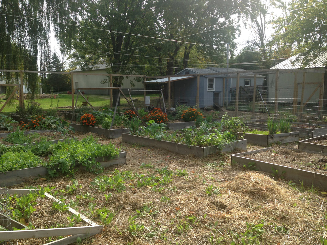 Setting up boundaries in the garden for your chickens