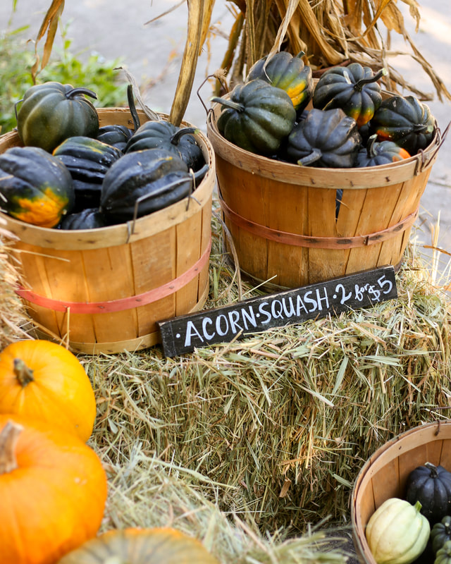 Organic acorn squash for sale at our farm stand in Milwaukee WI by Green Willow Homestead