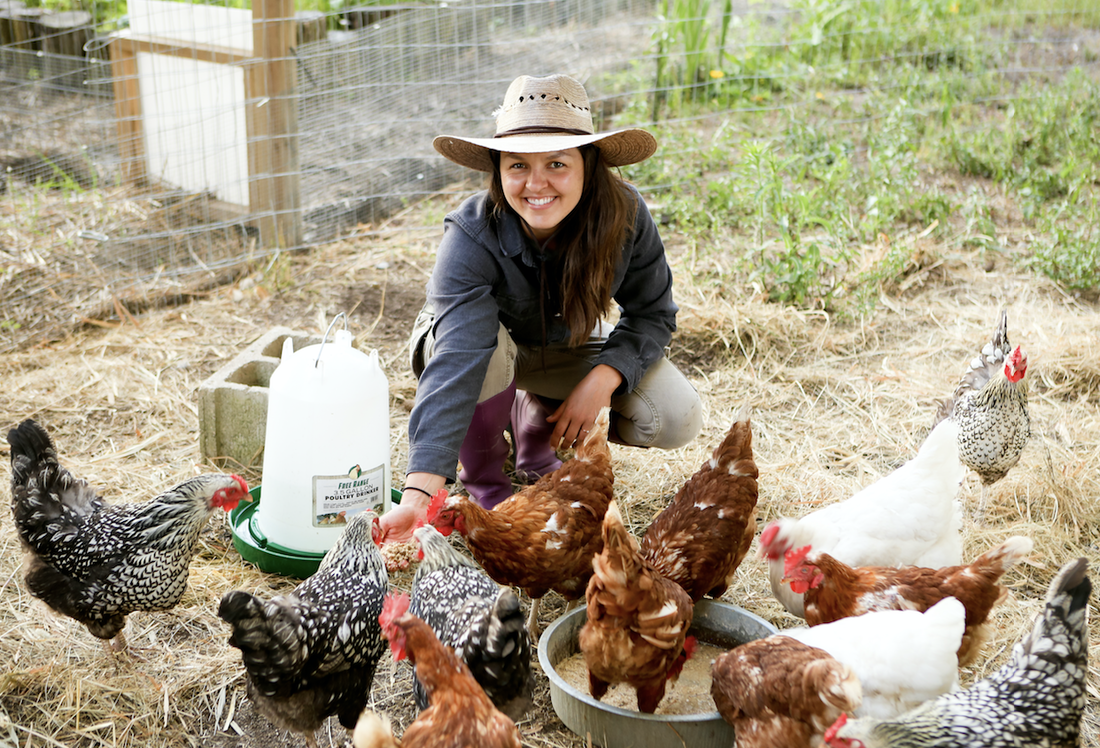 Everything you need to know about chicken keeping to build food security