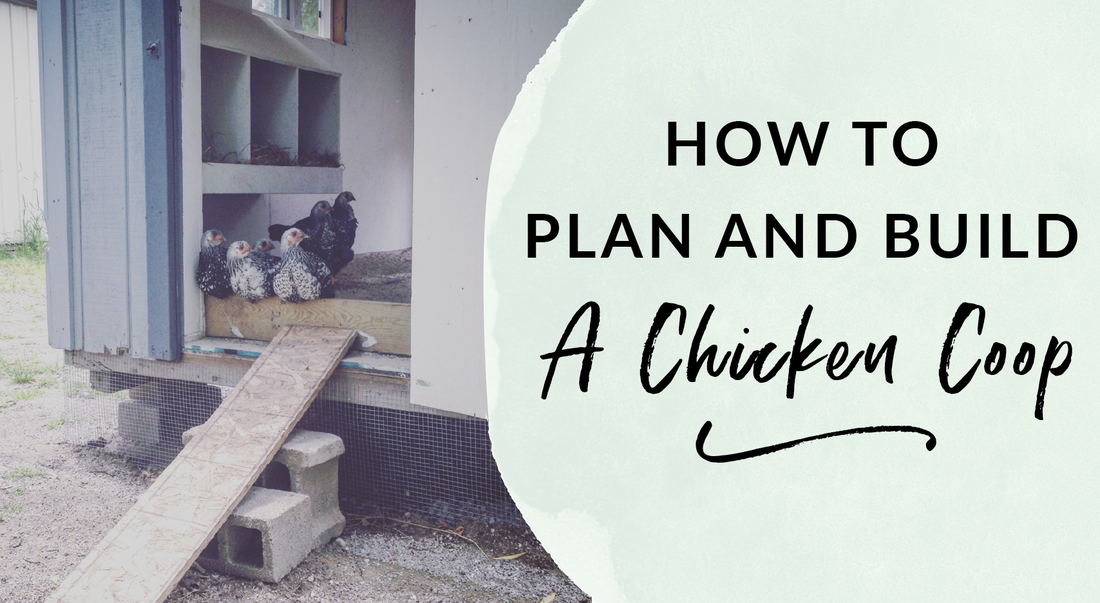 How to plan and build a chicken coop including nesting box build plans