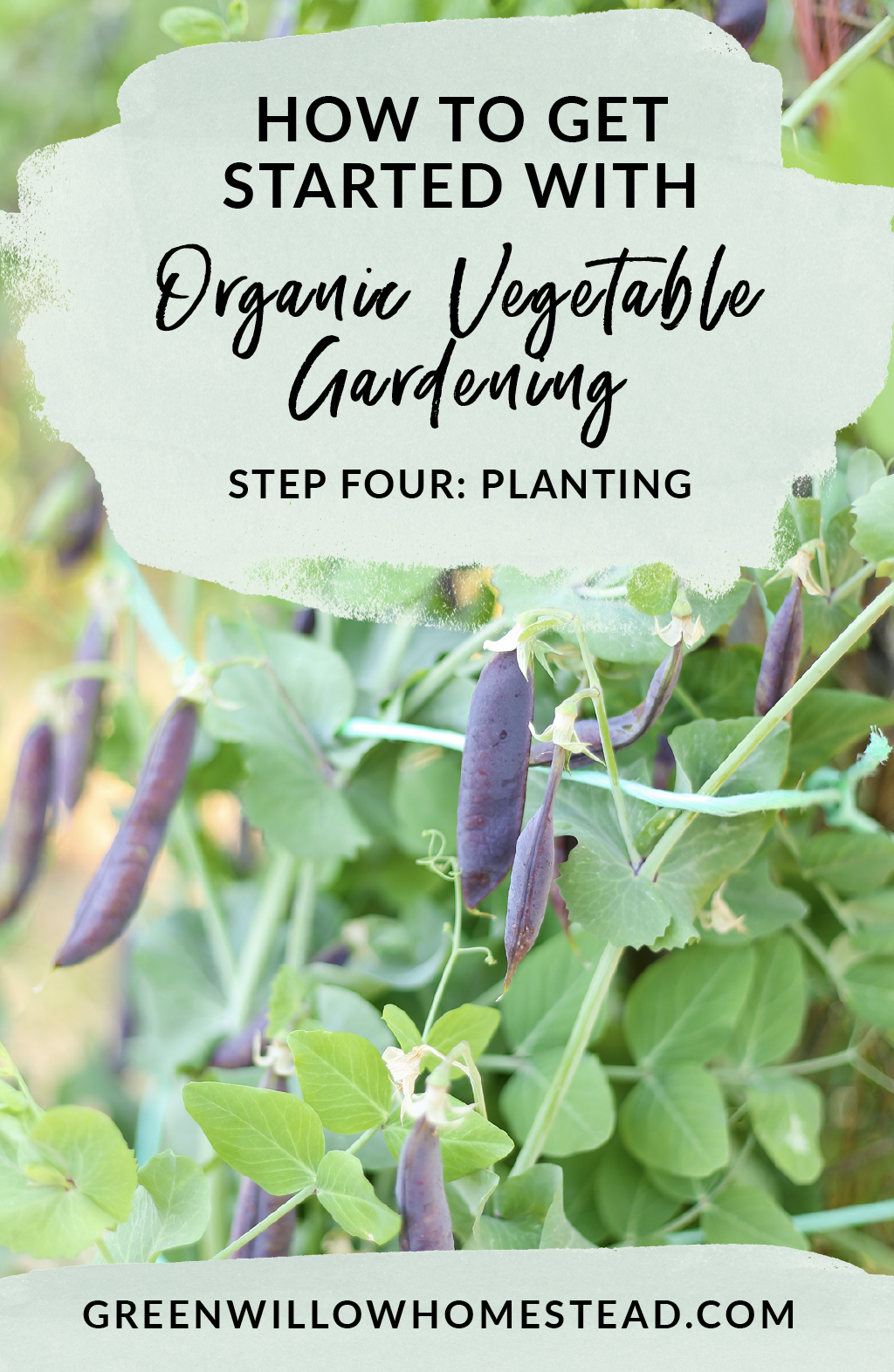 How to plant your very first organic vegetable garden, organic gardening for beginners