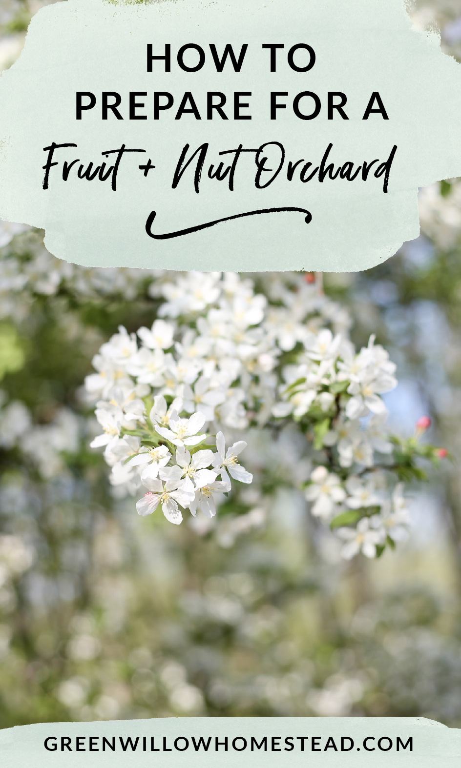 How to prepare your land for a fruit and nut orchard permaculture fruit guild