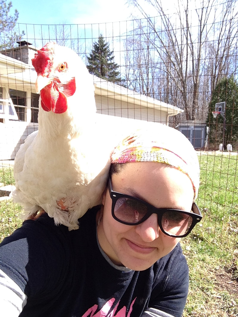 Our chicken survived surgery on her crop