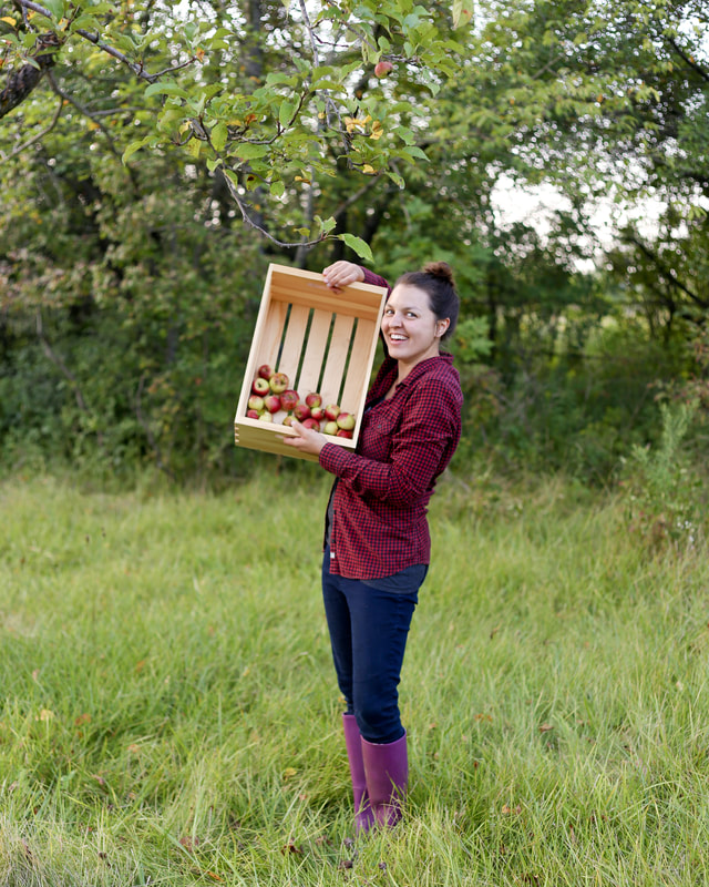 Picking apples to make apple cider vinegar