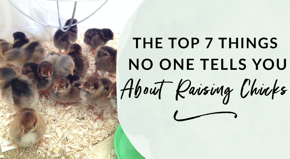 The top seven things no one tells you about raising chicks