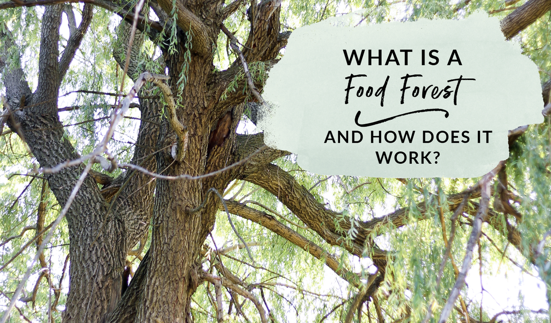 What is a food forest and how does it work?