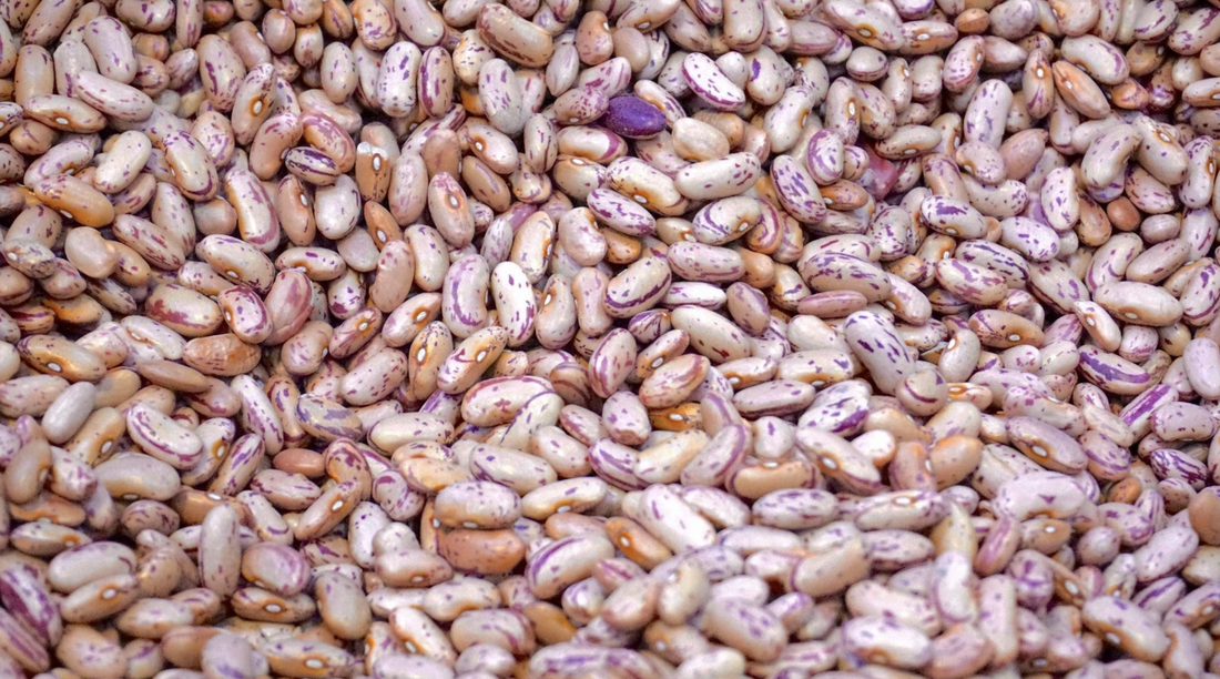 Why you should go for heirloom seeds over GMO or hybrid seeds