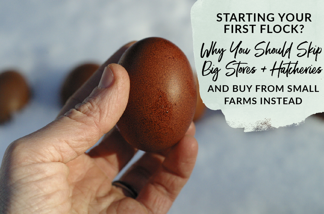 Why you should purchase hatching eggs from small farms and not large hatcheries